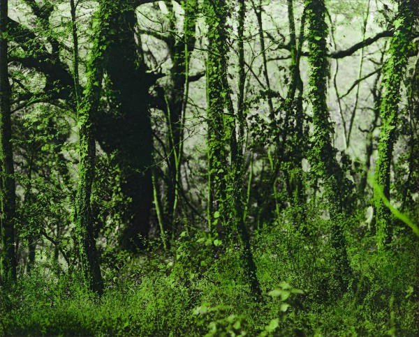 Serpentaragrün 568-2-4, oil on silver gelatine print, 71 x 88 cm, 2002