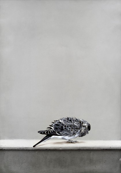 Taube 273-6-1, oil on silver gelatine print, 88 x 60 cm, 1999