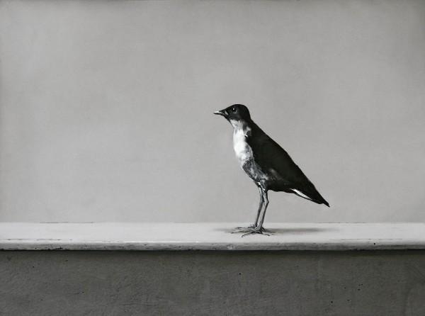 Vogel 273-6-5, oil on silver gelatine print, 30 x 40 cm, 1999