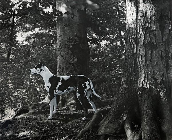 Hund 398-3-1, oil on silver gelatine print, 92 x 112 cm, 1999